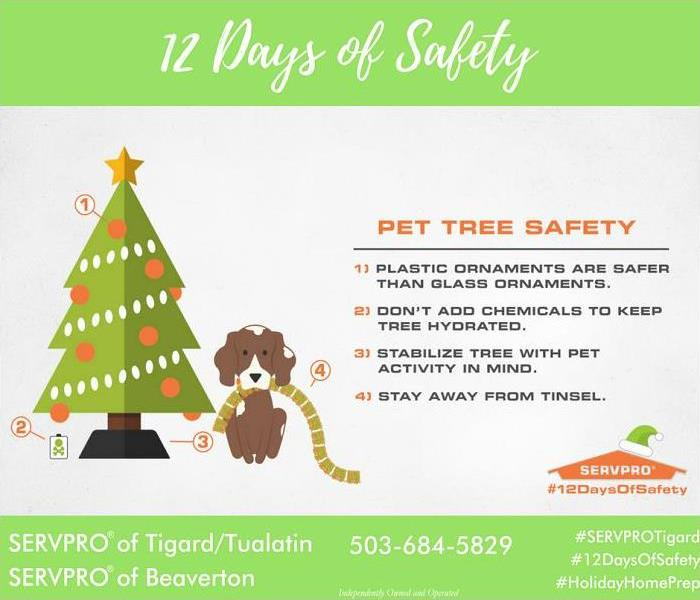 Mold Remediation 12 days of Safety, Day 5 tree safety