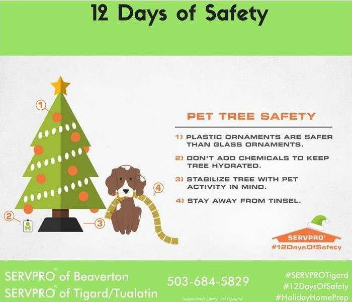 Mold Remediation 12 Days of Safety, Day 5; Tree Safety