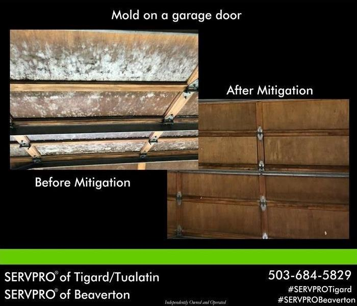 Mold Remediation Mold Before and After