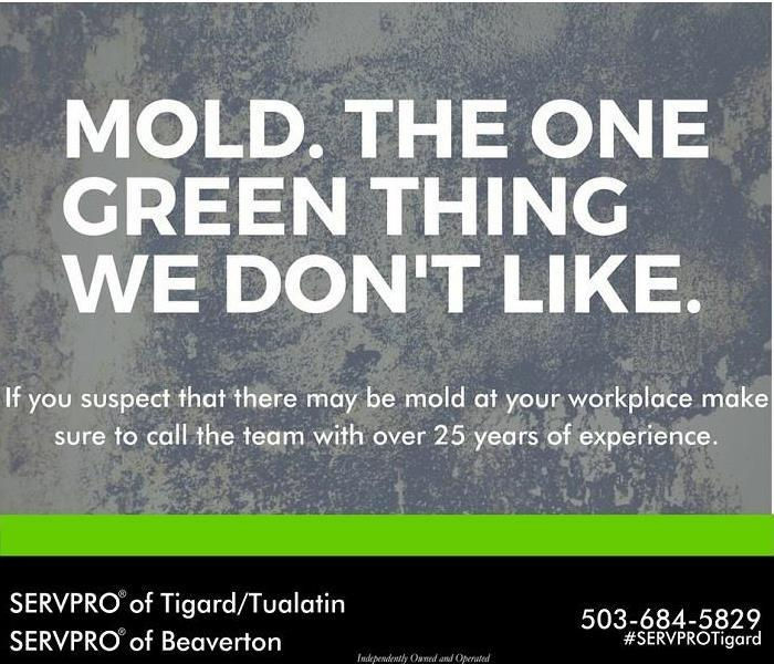 Mold Remediation Mold Remediation in Tigard