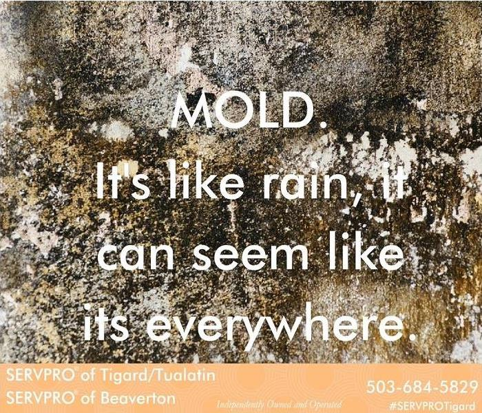 Mold Remediation Mold, it can be everywhere, like rain.