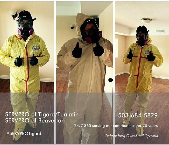 Mold Remediation Mold Safety