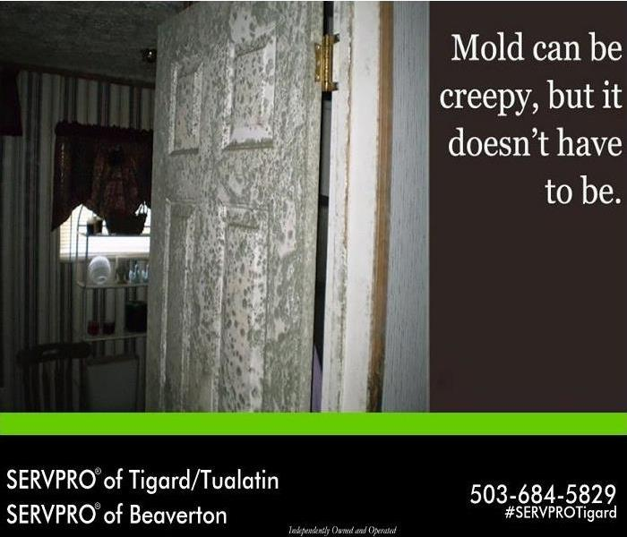 Mold Remediation Is mold giving you a scare in your home?